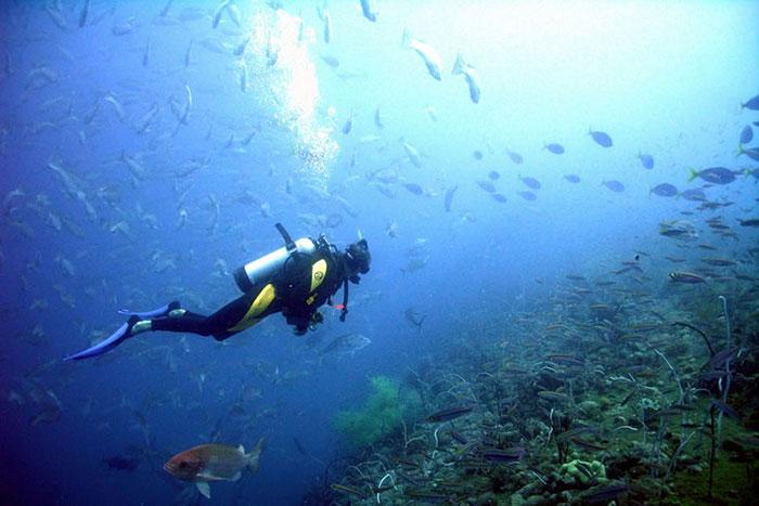 Mergulho em Bombinhas - Santa Catarina